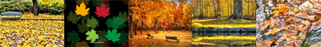 autumn free screensavers