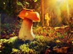 nature screensaver