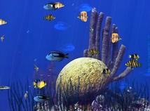 Fish Screensaver