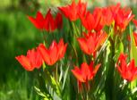 free flower screensaver