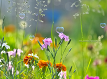 flowers screensavers