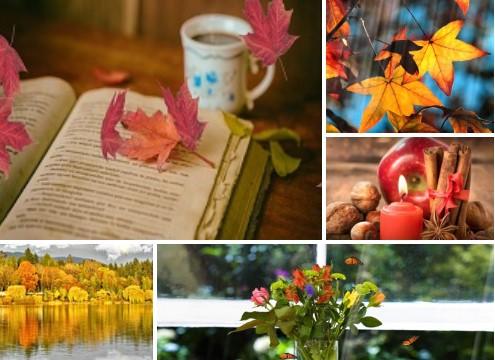 autumn screensavers, leaves, flowers, apple, landscape